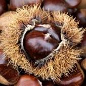 ChestnutsMarroni