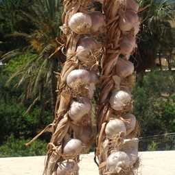 Red garlic from Nubia
