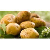 Italian Potatoes